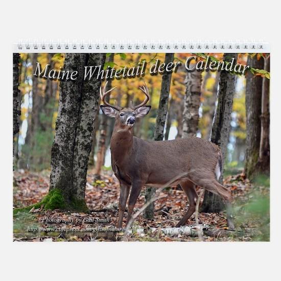 Maine whitetail deer Wall Calendar