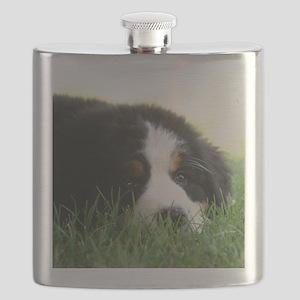 Bernese Puppy Flask