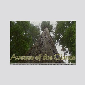 Founder's Tree - Avenue of the Giants Rectangle Ma