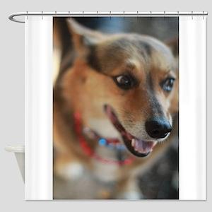 WElsh corgi up closeportrait Shower Curtain