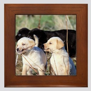 Labrador Puppies Framed Tile