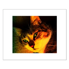 CatArt Poster: Dimey