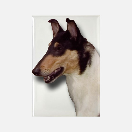 Funny Smooth collies Rectangle Magnet