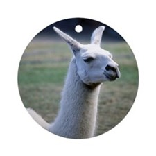 Llama (photo) Ornament (Round)