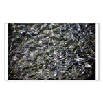 Shad in Fall Colors Sticker (Rectangle 10 pk)