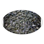 Shad in Fall Colors Sticker (Oval 10 pk)