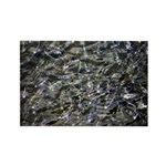 Shad in Fall Colors Rectangle Magnet (100 pack)