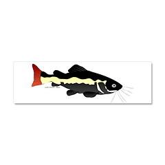 Redtailed Catfish (Audreys Amazon River) Car Magne
