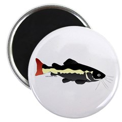Redtailed Catfish (Audreys Amazon River) Magnet