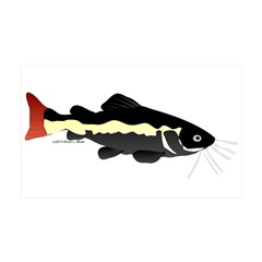 Redtailed Catfish (Audreys Amazon River) Wall Decal