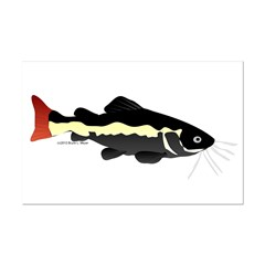 Redtailed Catfish (Audreys Amazon River) Posters