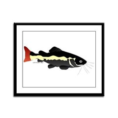 Redtailed Catfish (Audreys Amazon River) Framed Pa