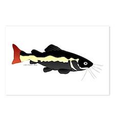 Redtailed Catfish (Audreys Amazon River) Postcards