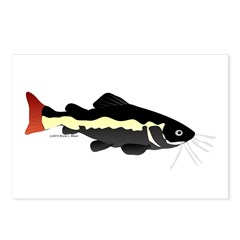 Redtailed Catfish (Audreys Amazon River) Postcards