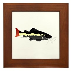 Redtailed Catfish (Audreys Amazon River) Framed Ti