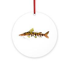 Tiger Shovelnose Catfish (Audreys Amazon River) Or