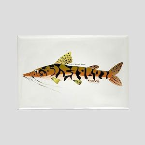 Tiger Shovelnose Catfish (Audreys Amazon River) Re