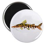 Tiger Shovelnose Catfish (Audreys Amazon River) Ma
