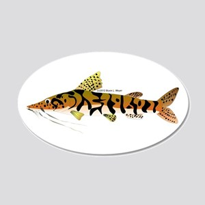 Tiger Shovelnose Catfish (Audreys Amazon River) 20