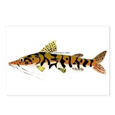 Tiger Shovelnose Catfish (Audreys Amazon River) Po