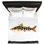 Tiger Shovelnose Catfish (Audreys Amazon River) Ki
