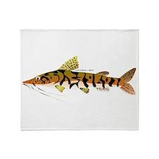 Tiger Shovelnose Catfish (Audreys Amazon River) S