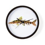 Tiger Shovelnose Catfish (Audreys Amazon River) Wa