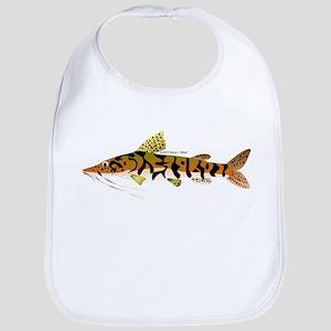 Tiger Shovelnose Catfish (Audreys Amazon River) Bi