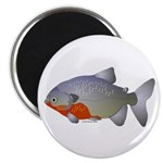 Red Belly Piranha Magnet