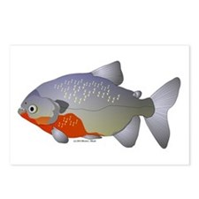 Red Belly Piranha Postcards (Package of 8)