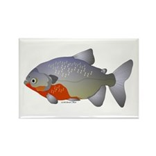 red belly piranha Rectangle Magnet