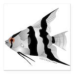 Angelfish (Amazon River) Square Car Magnet 3