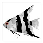 Angelfish (Amazon River) Square Car Magnet 3