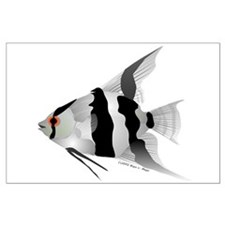 Angelfish (Amazon River) Large Poster