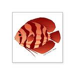 Discusfish (Discus) fish Square Sticker 3
