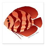 Discusfish (Discus) fish Square Car Magnet 3