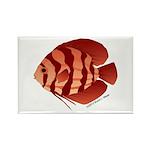 Discusfish (Discus) fish Rectangle Magnet (100 pac