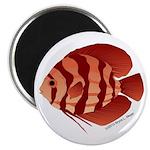 Discusfish (Discus) fish Magnet