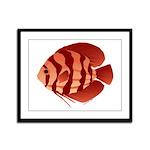 Discusfish (Discus) fish Framed Panel Print