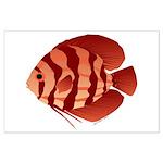 Discusfish (Discus) fish Large Poster