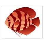 Discusfish (Discus) fish Small Poster