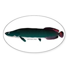 Arapaima (from Audreys Amazon River) Sticker (Oval