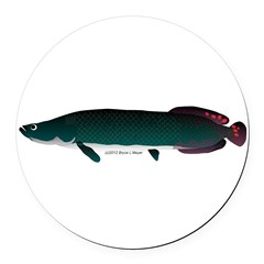 Arapaima (from Audreys Amazon River) Round Car Mag