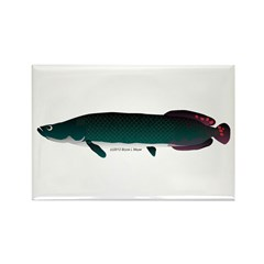 Arapaima (from Audreys Amazon River) Rectangle Mag