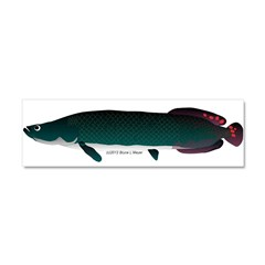 Arapaima (from Audreys Amazon River) Car Magnet 10