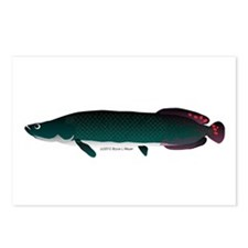 Arapaima (from Audreys Amazon River) Postcards (Pa