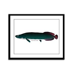 Arapaima (from Audreys Amazon River) Framed Panel