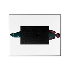 Arapaima (from Audreys Amazon River) Picture Frame