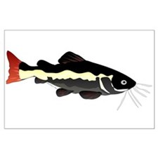 Redtail catfish poster