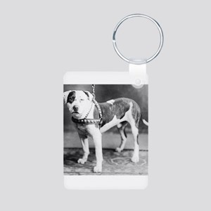 Websters Joker, a famous Colby bred dog Aluminum P